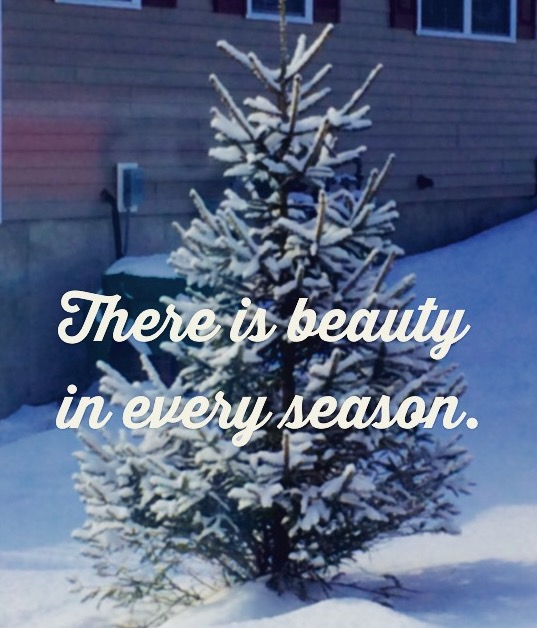 BeautyinEverySeason